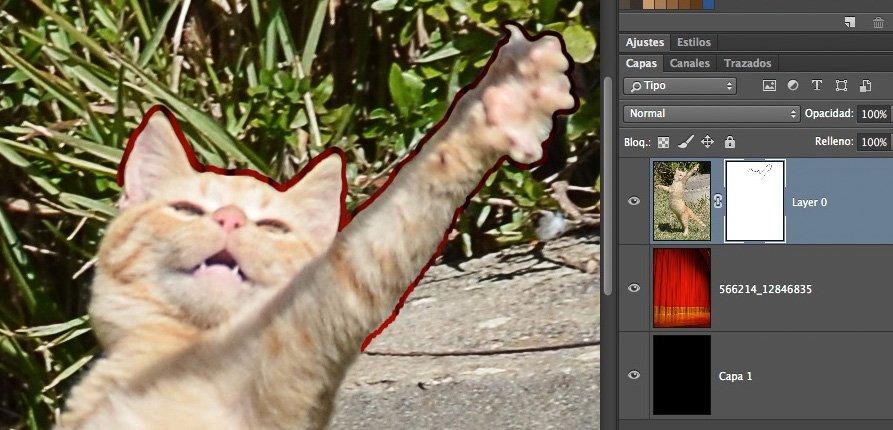 5-gato-a-mitad-contornear