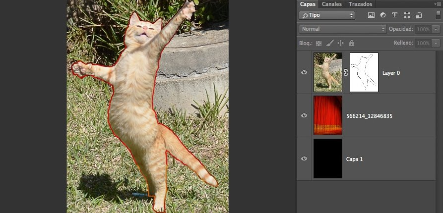 6-gato-contorneado-2