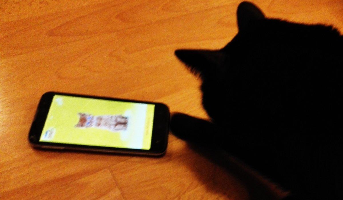 7 aplicaciones para las 7 vidas de tu gato - imagen 3