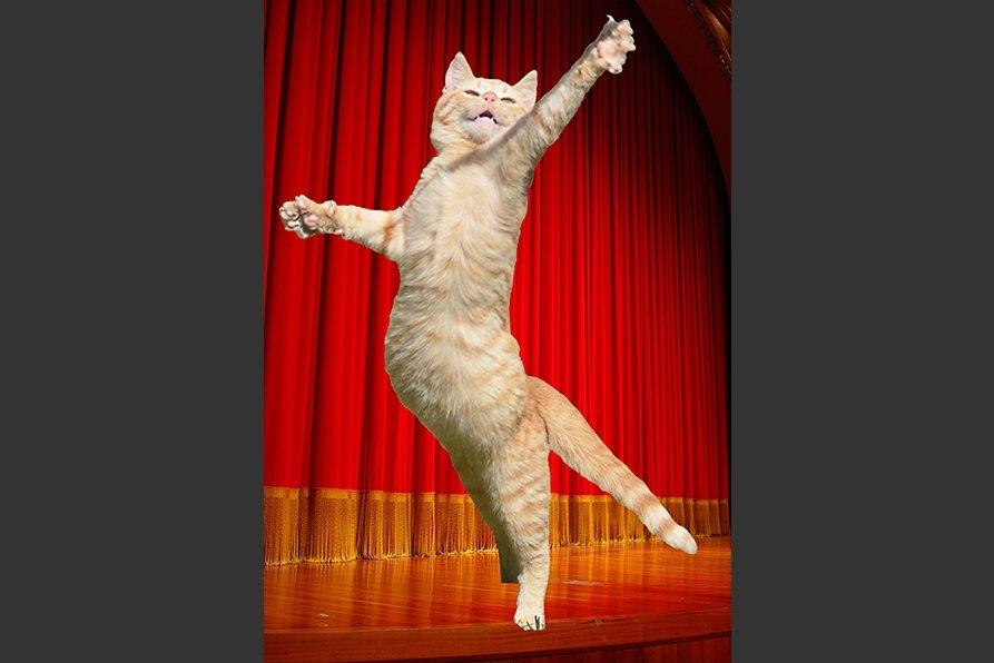 9-gato-recortado-2