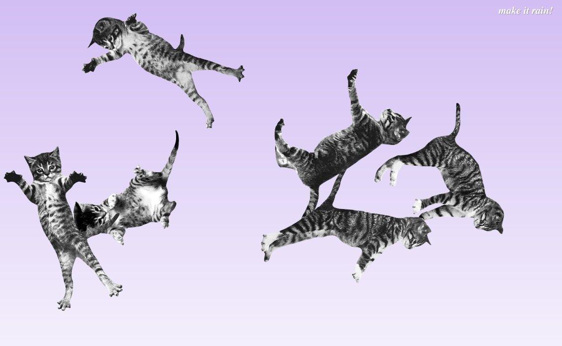 Gatitos saltando y saltando, sin más