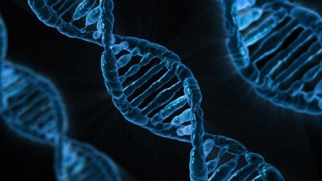Hélices de ADN