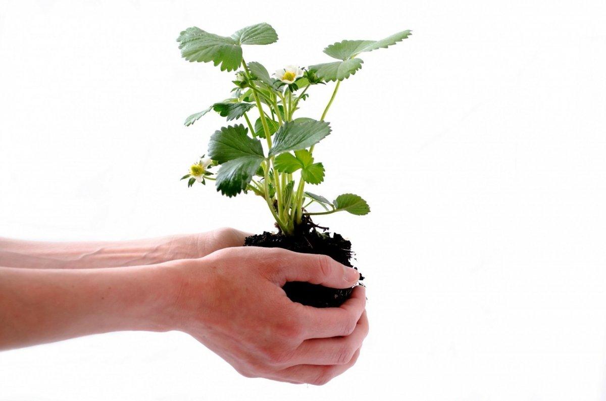 Plantas y humanos podrán interactuar