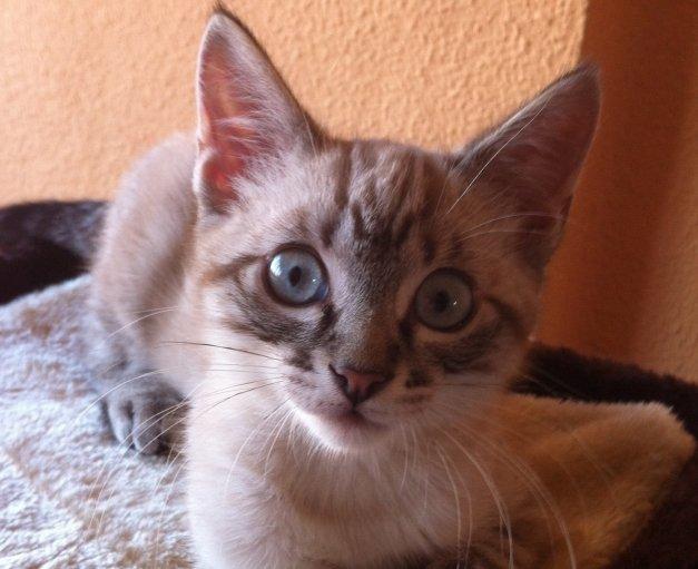 7 aplicaciones para las 7 vidas de tu gato