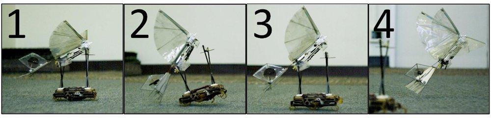Secuencia de vuelo cooperativa entre VelociRoACH y H2Bird