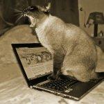 Tu gato ya puede subir sus fotos a Instagram gracias a Catstacam