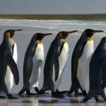 Las mejores distros Linux para aparcar Windows y Mac