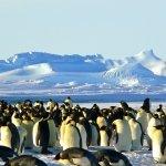¿Cómo elegir distribución Linux? Con la ayuda de Linux Distro Picker
