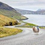«Sheep View 360» sorprende a Google