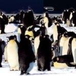 Un pingüino en tu PC: cinco soluciones para cambiar de sistema operativo