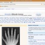 ¿Qué es y qué ofrece Wikimedia?