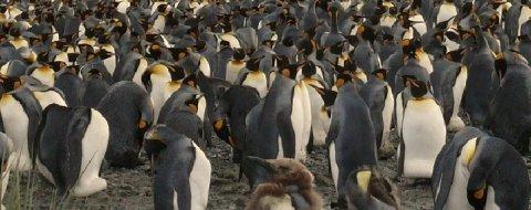 ¿Cuántos usuarios de Linux hay en el mundo?