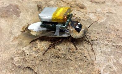 Cómo las cucarachas cyborg pueden salvar a los supervivientes de catástrofes