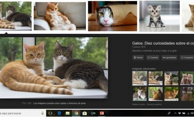 """Google elimina el botón de """"Ver imagen"""" en sus búsquedas"""