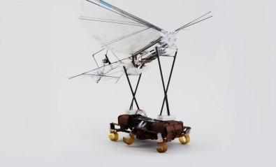 Una cucaracha robótica ayuda a un ornitóptero a despegar