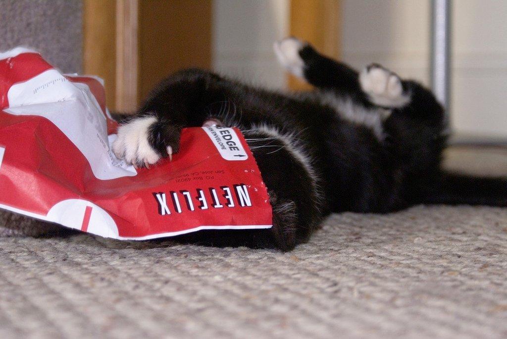 Un pequeño gato jugando con una carta de Netflix