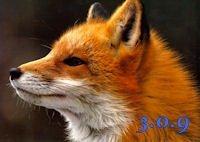 Firefox 3.0.9