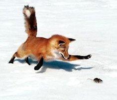 Firefox 3.5RC 3