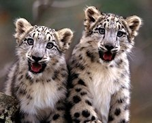Snow Leopard 10.6.1