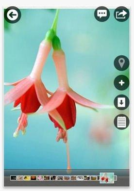 Descargar Picasa para móvil - 2
