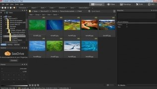 ACDSee Pro  8.0.262 imagen 2