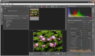 Bibble image 2 Thumbnail
