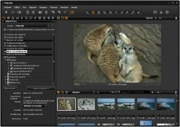 Capture One image 1 Thumbnail