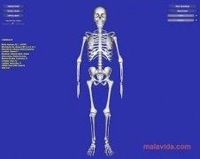 Esqueleto 3D imagen 1 Thumbnail