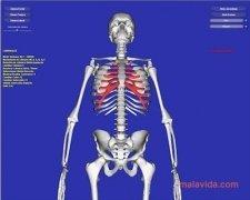 Esqueleto 3D imagen 3 Thumbnail