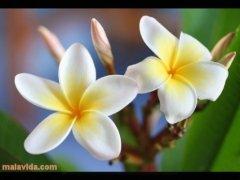 EyeDefender imagem 1 Thumbnail