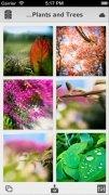 Heliog immagine 1 Thumbnail