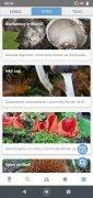 Mushroom Identify image 3 Thumbnail