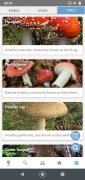 Mushroom Identify image 4 Thumbnail