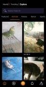 Kalo imagem 8 Thumbnail