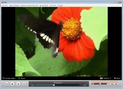 Miro imagem 3 Thumbnail
