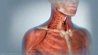 Muscle Premium imagen 1 Thumbnail