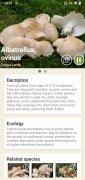 Mushrooms App image 8 Thumbnail