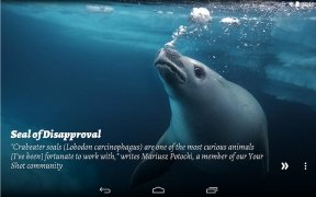 National Geographic Muzei image 6 Thumbnail
