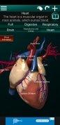 Internal Organs in 3D image 3 Thumbnail