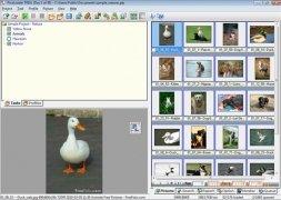 PicaLoader image 1 Thumbnail