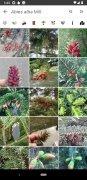 PlantNet bild 6 Thumbnail