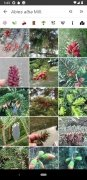 PlantNet imagen 6 Thumbnail