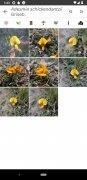 PlantNet bild 8 Thumbnail