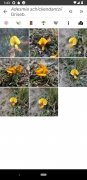 PlantNet imagen 8 Thumbnail