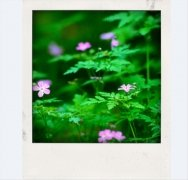 Poladroid 画像 2 Thumbnail
