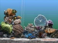 SereneScreen Marine Aquarium immagine 2 Thumbnail