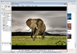 ThumbsPlus Изображение 1 Thumbnail