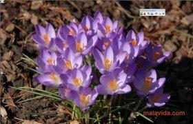 Ulead SmartSaver imagem 2 Thumbnail