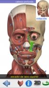 Visual Anatomy image 2 Thumbnail