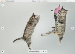 Wallpaper Wizard imagen 7 Thumbnail